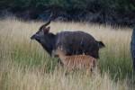 Hunting pics 175